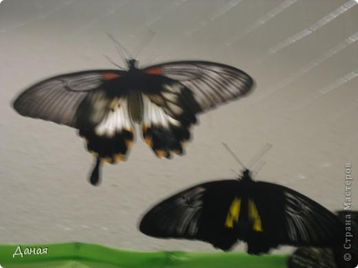 В субботу у нас в городе шел первый снег и было весьма прохладно. Но мы с сыном решили подарить себе кусочек лета, отправившись на выставку тропических бабочек. Я ожидала, что мы увидим замученных созданий в стеклянных коробках. Но мы попали в маленькую комнатку, в которой бабочки  летали... фото 14