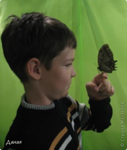 В субботу у нас в городе шел первый снег и было весьма прохладно. Но мы с сыном решили подарить себе кусочек лета, отправившись на выставку тропических бабочек. Я ожидала, что мы увидим замученных созданий в стеклянных коробках. Но мы попали в маленькую комнатку, в которой бабочки  летали... фото 17