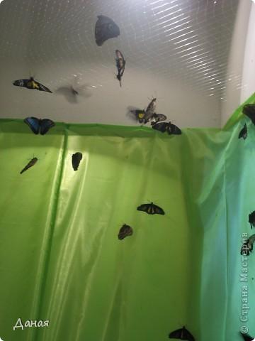 В субботу у нас в городе шел первый снег и было весьма прохладно. Но мы с сыном решили подарить себе кусочек лета, отправившись на выставку тропических бабочек. Я ожидала, что мы увидим замученных созданий в стеклянных коробках. Но мы попали в маленькую комнатку, в которой бабочки  летали... фото 15