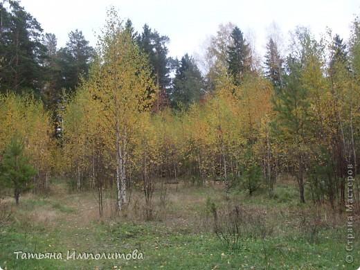 Унылая осень фото 3