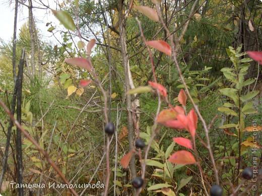 Унылая осень фото 7