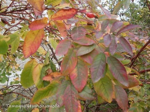 Унылая осень фото 16
