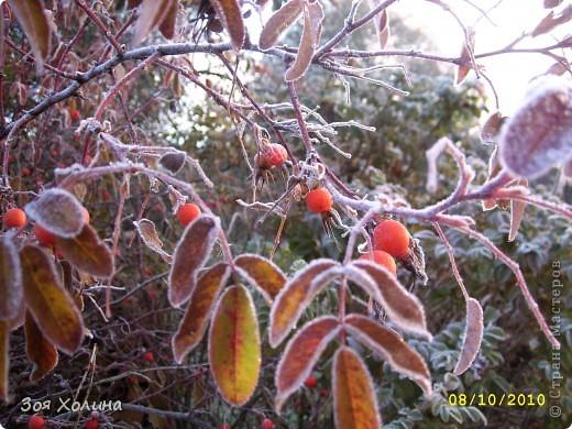 Природа в октябре фото 6