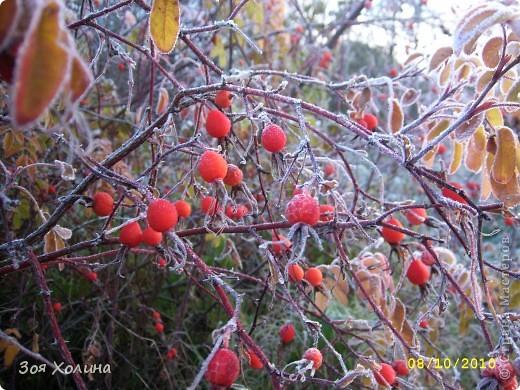 Природа в октябре фото 8