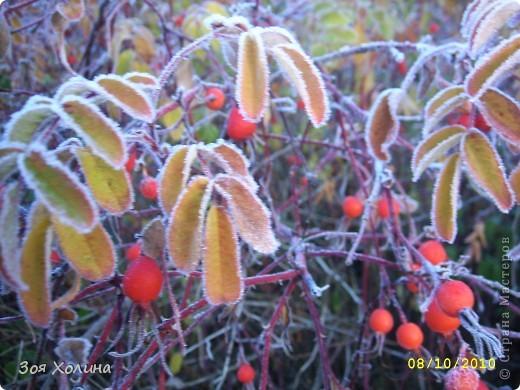 Природа в октябре фото 7
