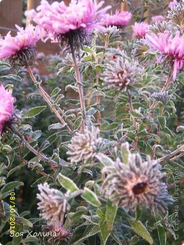 Природа в октябре фото 12
