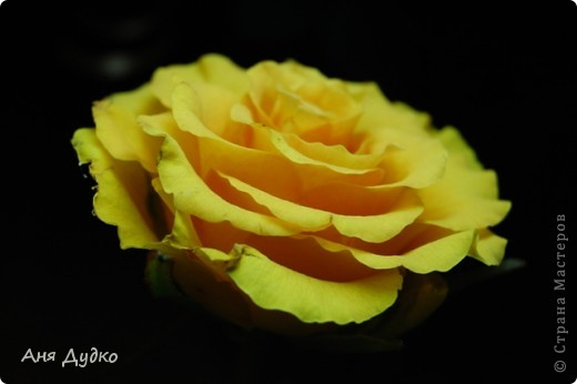 roses... фото 9