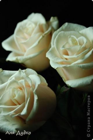 roses... фото 3