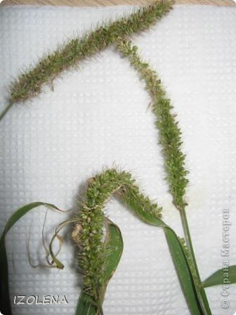 Ура! Я сегодня нашла эту траву на корню. Это треть длины стеблей. Трава разложена на двух раскрытых салфетках. фото 2