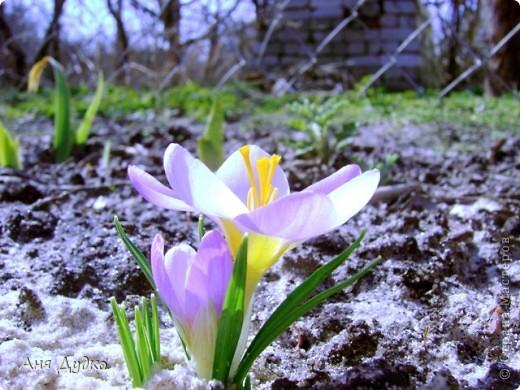 Никогда не надо слушать, что говорят цветы. Надо просто смотреть на них и дышать их ароматом фото 1