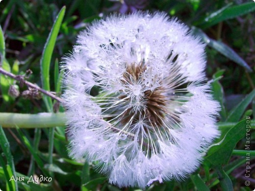 Никогда не надо слушать, что говорят цветы. Надо просто смотреть на них и дышать их ароматом фото 2