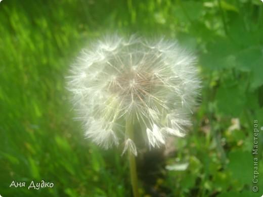 Никогда не надо слушать, что говорят цветы. Надо просто смотреть на них и дышать их ароматом фото 15