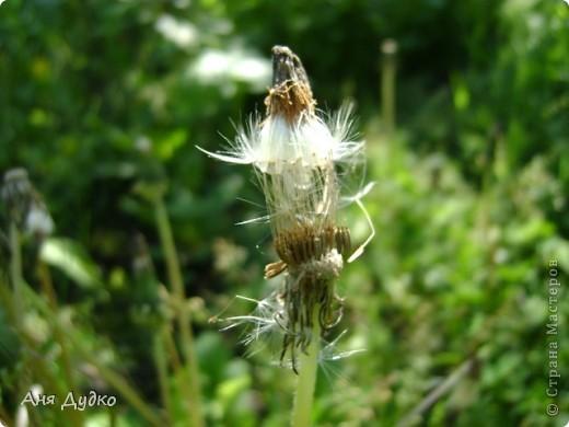 Никогда не надо слушать, что говорят цветы. Надо просто смотреть на них и дышать их ароматом фото 11