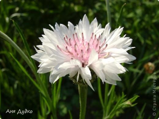 Никогда не надо слушать, что говорят цветы. Надо просто смотреть на них и дышать их ароматом фото 7