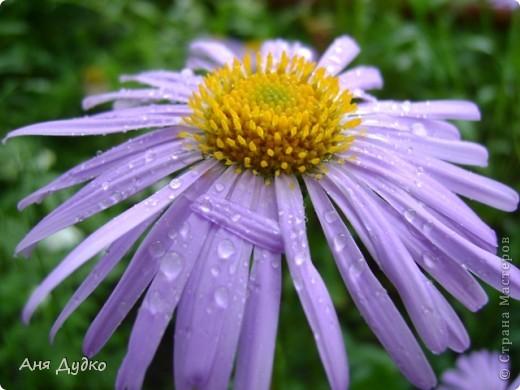 Никогда не надо слушать, что говорят цветы. Надо просто смотреть на них и дышать их ароматом фото 5