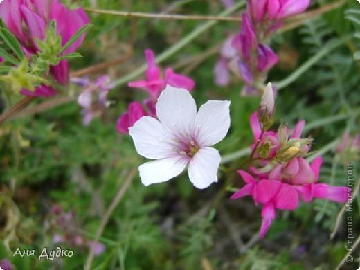 Никогда не надо слушать, что говорят цветы. Надо просто смотреть на них и дышать их ароматом фото 8