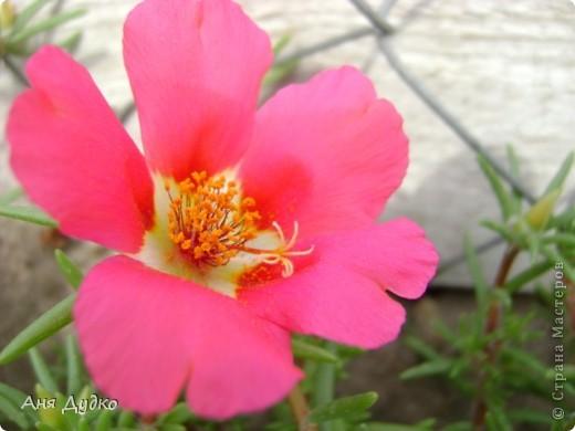 Никогда не надо слушать, что говорят цветы. Надо просто смотреть на них и дышать их ароматом фото 10
