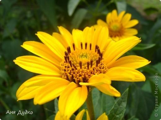 Никогда не надо слушать, что говорят цветы. Надо просто смотреть на них и дышать их ароматом фото 4