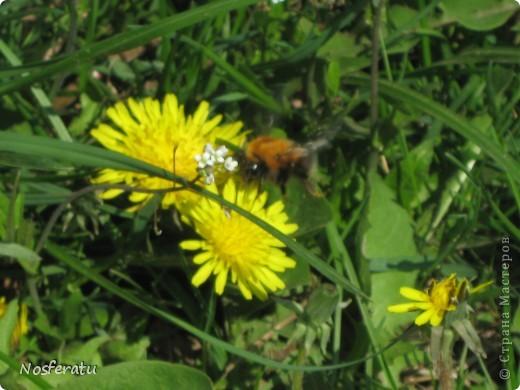 насекомые фото 1