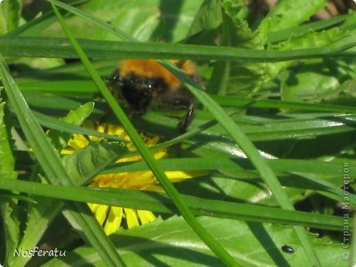 насекомые фото 2