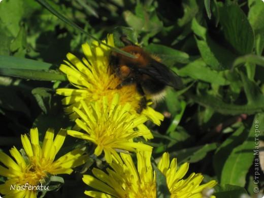 насекомые фото 3