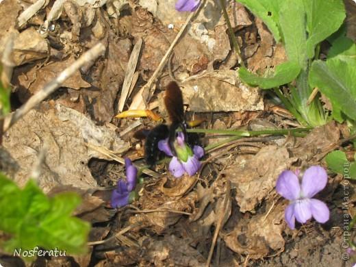 насекомые фото 5