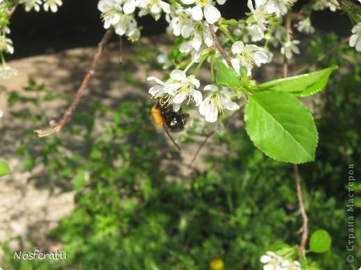 насекомые фото 7