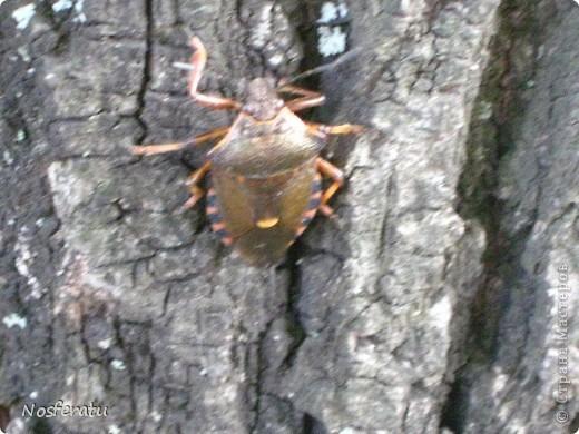 насекомые фото 8