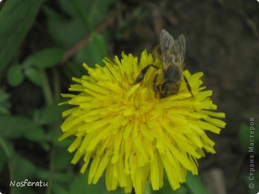 насекомые фото 10