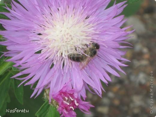 насекомые фото 9