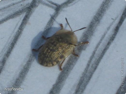 насекомые фото 11