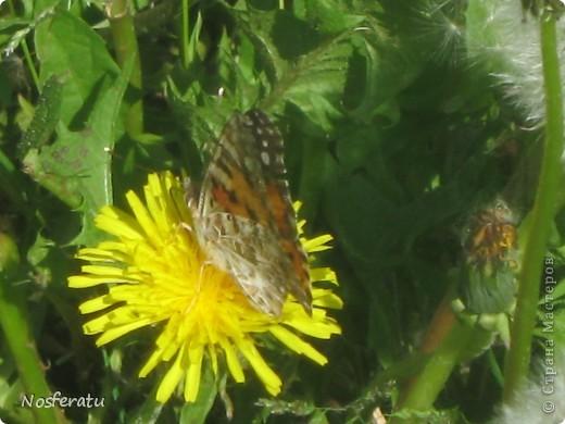 насекомые фото 12