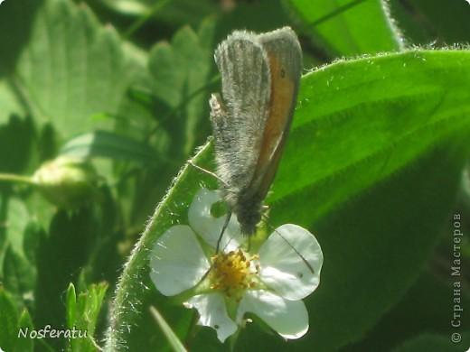 насекомые фото 13