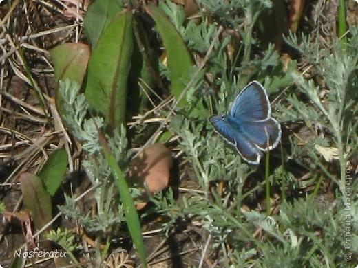 насекомые фото 14