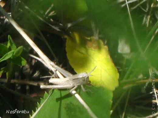 насекомые фото 16