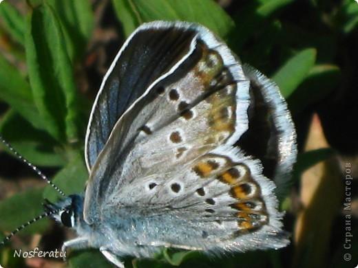 насекомые фото 17