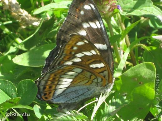 насекомые фото 18