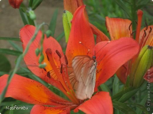 насекомые фото 19