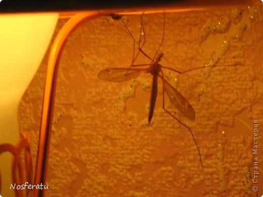 насекомые фото 20