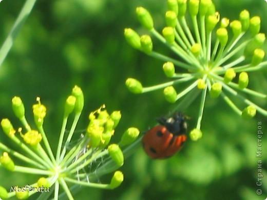 насекомые фото 22