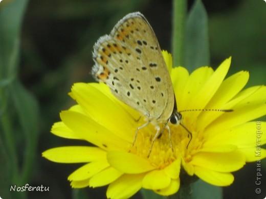 насекомые фото 23