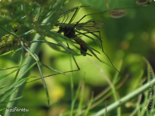насекомые фото 24