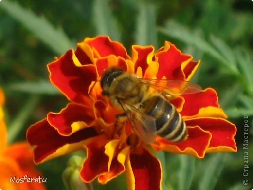 насекомые фото 25