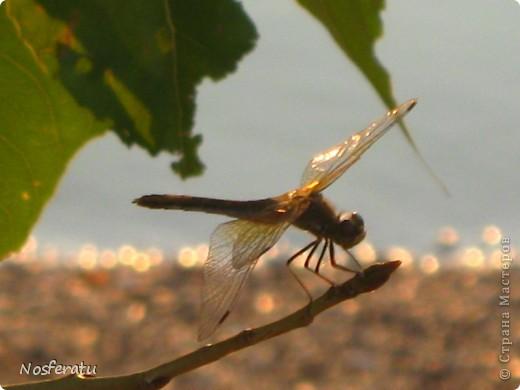 насекомые фото 26