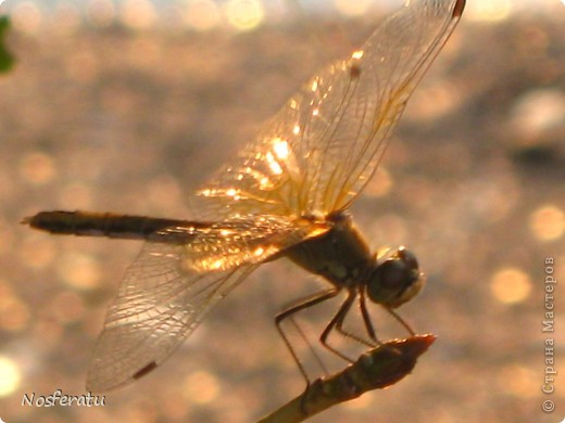 насекомые фото 27