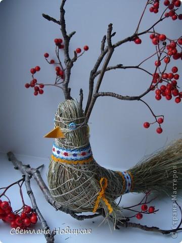 А может быть и не голубь))) Не знаю, что за птица  и как ее назвать. Все птицы летят осенью с севера на юг, а эта прилетела с юга к нам на север))) фото 3