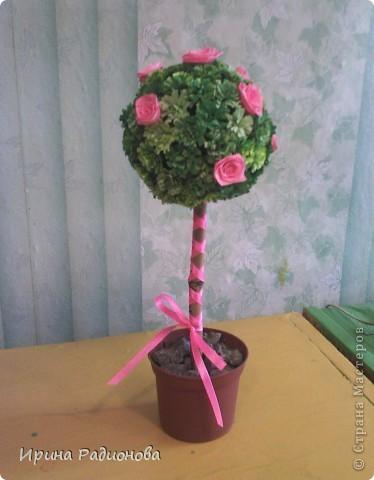 деревца в подарок фото 1