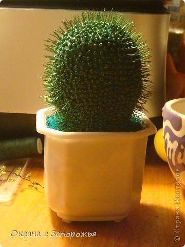 Новая береза и новый кактус- они меня уже покинули фото 2