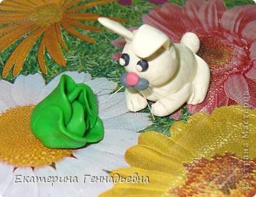 Заяц, который очень любит капусту. фото 1
