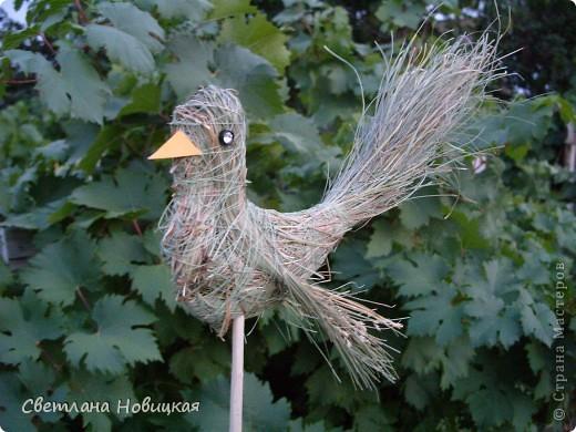 Еще одна птичка. Загрузила ее вчера, но она улетела. Наверное, полетела в теплые края... да решила вернуться. фото 5